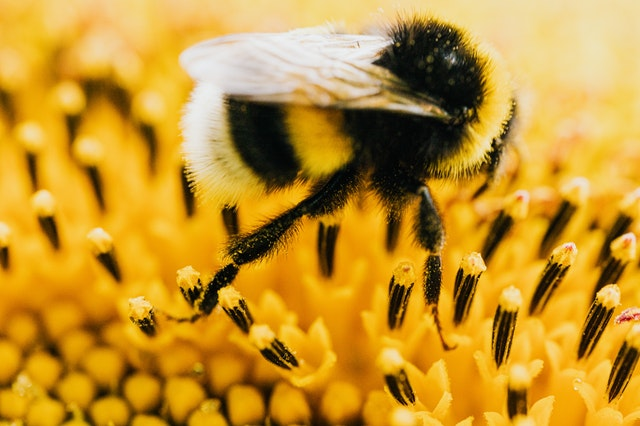 Benefits Buzz – August